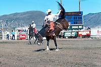 Cawston (near Keremeos), BC, British Columbia, Canada - Chopaka Rodeo, Similkameen Valley, Saddle Bronc Riding, Cowboy Rider on Wild Horse