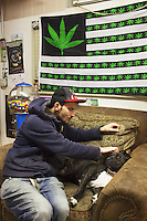 USA. Colorado state. Denver. Hollywood (L) caresses a dog at iBAKE Denver, the first private membership head-shop that people can smoke marijuana in. Cannabis flag and chewing gun dispenser. Cannabis, commonly known as marijuana, is a preparation of the Cannabis plant intended for use as a psychoactive drug and as medicine. Pharmacologically, the principal psychoactive constituent of cannabis is tetrahydrocannabinol (THC); it is one of 483 known compounds in the plant, including at least 84 other cannabinoids, such as cannabidiol (CBD), cannabinol (CBN), tetrahydrocannabivarin (THCV), and cannabigerol (CBG). 18.12.2014 © 2014 Didier Ruef