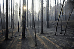 Burned trees are pictured in Aliaga, near Teruel, on July 24, 2009. Deadly summer wild fires spread across Spain, France, Italy and Greece on Friday with holidaymakers rescued from beaches and thousands of firefighters brought into the battle. on July 24, 2009. (C) Pedro ARMESTRE