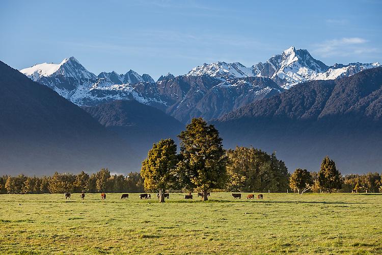West Coast Farmland, South Island, New Zealand - stock photo, canvas, fine art print