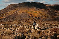 Edgar Oscanoa rides Dot through aflock of trailing in Upper Gully  in the early morning counting to make sure they are all still there.<br /> <br /> Sharon O'Toole drove her granddaughter Siobhan Lolly and father George Salisbury around the Ladder Livestock Ranch in southern Wyoming (west of Bags at the Colorado border.) Peruvian shepherds traditionally work at the ranch watching over sheep.  Dot, an adopted mustang that came from the correctional center in Riverside, saved a shepherd's life by finding his way home on a cold night when they were lost.  Nelson, the saved worker, left years ago but the horse is still a favorite among ranch hands like Edgar.
