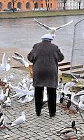 wer fliegen kann ist im Vorteil: EUROPA, DEUTSCHLAND, MECKLENBURG- VORPOMMERN, SCHWERIN, (EUROPE, GERMANY), 16.01.2009: alte Frau beim Voegel fuettern,  Tier, Tierbild, Tierbilder, Tiere, Voegel, Voegeln, Voegel, Vogelkunde, Voegeln, Vogelwelt,  Entenvoegel, Wasservoegel, fuettern, Fuetterung, Alleinsein, Alleinstehend, Alleinstehender, Alleinstehendes,Begriffe, Beschaulich,  Einsam, einsamer, einsames, Gefuehle, Gefuehlen, Mensch, Menschenscheu, menschlich, menschliche, menschlichen, menschlicher, menschliches, Moewe, Person, Symbol,  Symbolaufnahme, Symbolaufnahmen, Symbolbild, Symbolbilder,  Symbolisch, Symbol .