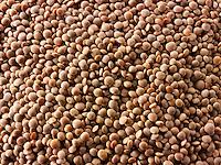 Uncooked brown lentils