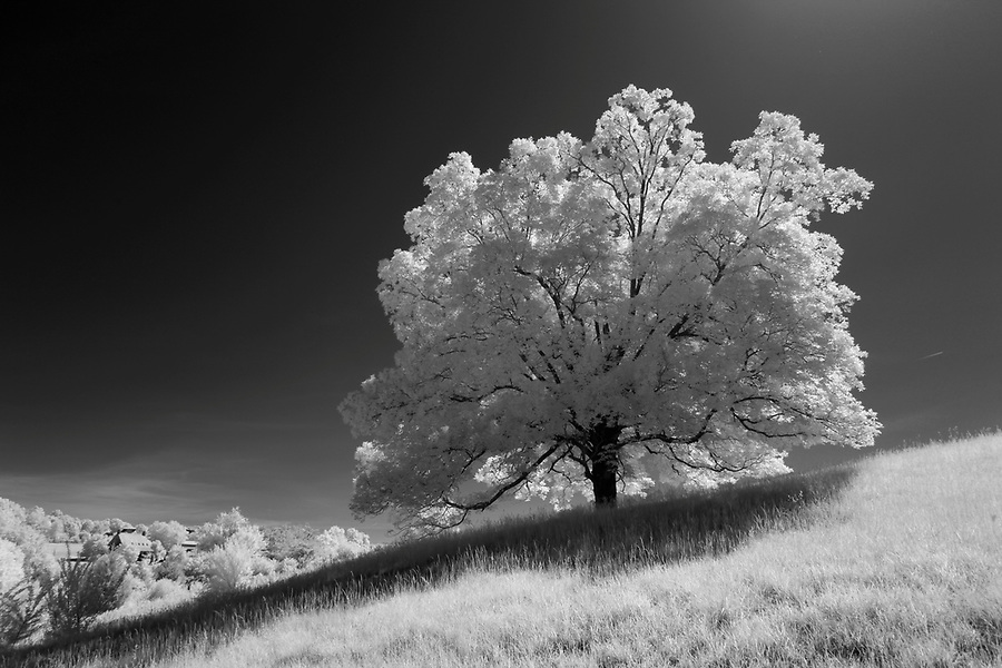 Fluvanna County, Virginia photographed in infrared. Photo/Andrew Shurtleff