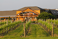 Macari Vineyard, Mattituck, New York,  Long Island, North Fork