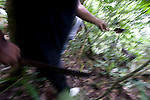 Thom Chipwelong uses his machete to carve a way through the jungle that Sakae Oba and his men occupied for 16 months after Saipan was taken over by US forces in Saipan on 22 February 2011. .Photographer: Robert Gilhooly