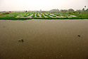 Rainstorm hits floating gardens on the Inle lake.