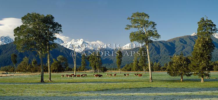 Frost on farmland near Fox Glacier. Westland Region. New Zealand.