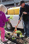 Athens Mayor Steve Patterson digs up weeds in front of the City Building during Athens Beautification Day on April 9, 2017.