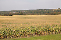 A wheat field is pictured in Madison County, NY, Wednesday September 11, 2013.
