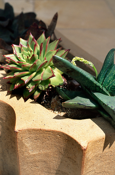 Succulents in container designed by South African artist Dina Prinsloo