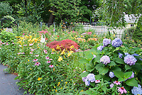 Lush flowering backyard with fence, lawn grass, daylilies, hydrangea, Jpanaese maple tree, rudbeckia black eyed susans, echinacea purple coneflowers, lilies