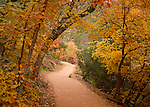 Utah, Southern, Zion National Park. Emerald Pools Trail in Autumn.
