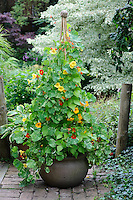 Annual Climber Containers