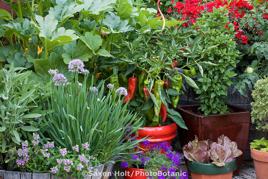 Small space container patio garden with herbs (chives, basil, sage) and vegetables (peppers, squash)