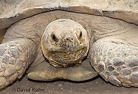 1121-0801  African Spurred Tortoise, Geochelone sulcata © David Kuhn/Dwight Kuhn Photography