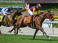 ARCADIA, CA APRIL 8: #7 Hillhouse High ridden by jockey Corey Nakatani first time past the grandstand in the Royal Heroine Stakes (Grade ll) on April 8, 2017 at Santa Anita Park in Arcadia, CA. (Photo by Casey Phillips/Eclipse Sportswire/Getty Images)