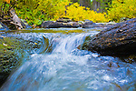 Clean, cool waters flowing down a Rocky Mountain stream