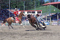 Cowboy with Hand caught in Rope after falling off Horse in Bareback Riding Event, at the Cloverdale Rodeo, Surrey, British Columbia, Canada