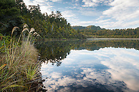 Morning at Alpine Lake in Okarito Sanctuary, West Coast, World Heritage Area, South Westland, New Zealand