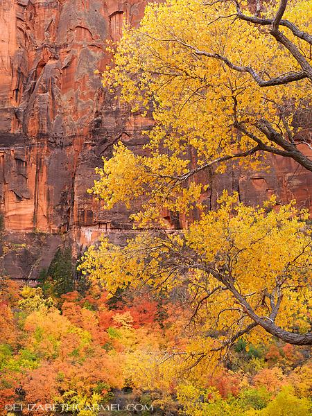 Canyon Autumn