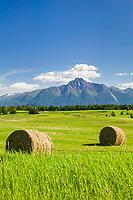 Hay bales, Agriculture in the Matanuska Susitna valley town of Palmer, Alaska