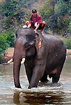 An Asian elephant (elephas maximus)and the mahout having it's morning bath at Pak Lai, Laos.
