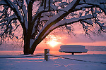 Soft winter light seen over Lake Coeur d' Alene with snow covered tree and table on Coeur d' Alene Lake drive, Idaho.
