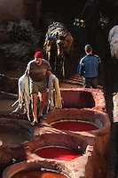 Portrait of worker on the way to the dyeing pits, Chouara, tannery, Fez, Morocco, pictured on February 22, 2009 in the morning. The Chouara tannery is the largest of the four ancient tanneries in the Medina of Fez where the traditional work of the tanners has remained unchanged since the 14th century. It is composed of numerous dried-earth pits where raw skins are treated, pounded, scraped and dyed. Tanners work in vats filled with various coloured liquid dyes derived from plant sources. Colours change every two weeks, poppy flower for red, mint for green, indigo for blue, chedar tree for brown and saffron for yellow. Fez, Morocco's second largest city, and one of the four imperial cities, was founded in 789 by Idris I on the banks of the River Fez. The oldest university in the world is here and the city is still the Moroccan cultural and spiritual centre. Fez has three sectors: the oldest part, the walled city of Fes-el-Bali, houses Morocco's largest medina and is a UNESCO World Heritage Site;  Fes-el-Jedid was founded in 1244 as a new capital by the Merenid dynasty, and contains the Mellah, or Jewish quarter; Ville Nouvelle was built by the French who took over most of Morocco in 1912 and transferred the capital to Rabat. Picture by Manuel Cohen.