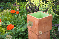 A square ceramic terra cotta urn cames alive with a little green paint and sets off the shade garden alongside oriental poppies, maroon barberry and yellow varigated confrey.