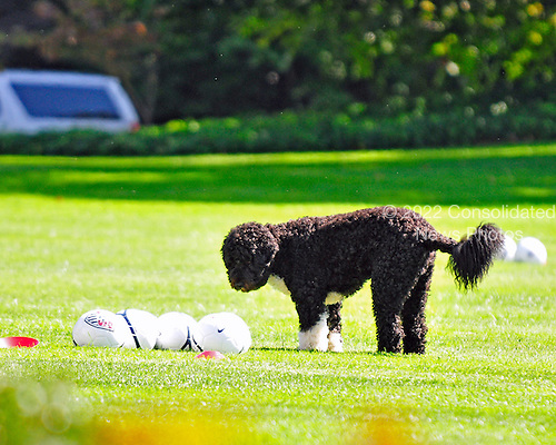 "Bo, the Obama family dog, looks at some Soccer balls as he plays on the South Lawn of the White House in Washington, D.C. prior to a ""Let's Move"" event sponsored by first lady Michelle Obama on Thursday, October 6, 2011..Credit: Ron Sachs / CNP"