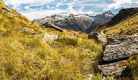 Fields of alpine vegetation near Harris Saddle on Routeburn Track.  Darran Mountains behind, Fiordland National Park, UNESCO World Heritage Area, Southland, South Island, New Zealand, NZ