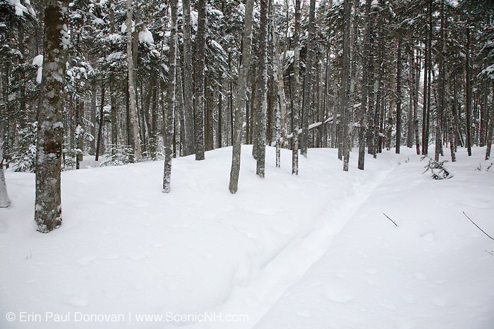 Snow covered forest along the Hancock Notch Trail in the White Mountains of New Hampshire during the winter months. This forest was logged during the East Branch & Lincoln Railroad era, which as was a logging railroad in operation from 1893-1948.