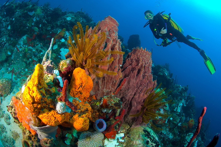 Colourful coral reef scape in north Dominica with sponges, crinoids and female diver