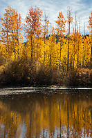 """Aspen Reflections 1"" - Photograph of yellow aspen trees in the fall at a pond near Spooner Lake, Nevada."
