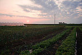 Northfield, Minnesota<br /> July 18, 2014<br /> <br /> The Garden of Egan Farm which became USDA certified organic in August 2014 under the direction of Linda Halley and is part of the Wedge Co-op in Minneapolis, St. Paul.