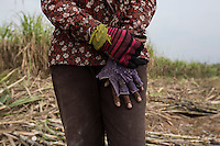 """Cambodia - Kampong Speu Province - Chei Reoun's hands, 35, working in the sugarcane plantation. In 2010, she stripped of their land. Chei was forced to accept a compensation of 70,000 riel (around 17 USD) for 1,5 hectares of land, after the commune chief warned her that the company would have taken her land with or without her consent. """"With the plantation, they told us that the work would have knocked at our door. It is true, but the work is just about sweating and cutting all day long"""" she complains. While Chei is still able to pay for the school fees of her three children, she is growing worried about their future. """"Without land, they will grow poorer and poorer"""" she says."""