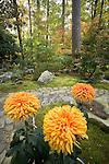 fall scenes in the Sarah P Duke Gardens<br /> <br /> Culberson Asiatic Arboretum