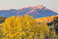 Sunrise at Guardsman Pass in Utah's Wasatch Mountains with bright yellow aspen leaves.