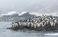 Group of adelie penguins on Gourdin Island, Antarctica Peninsula.