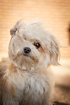 20140812 Dog Photo Shoot