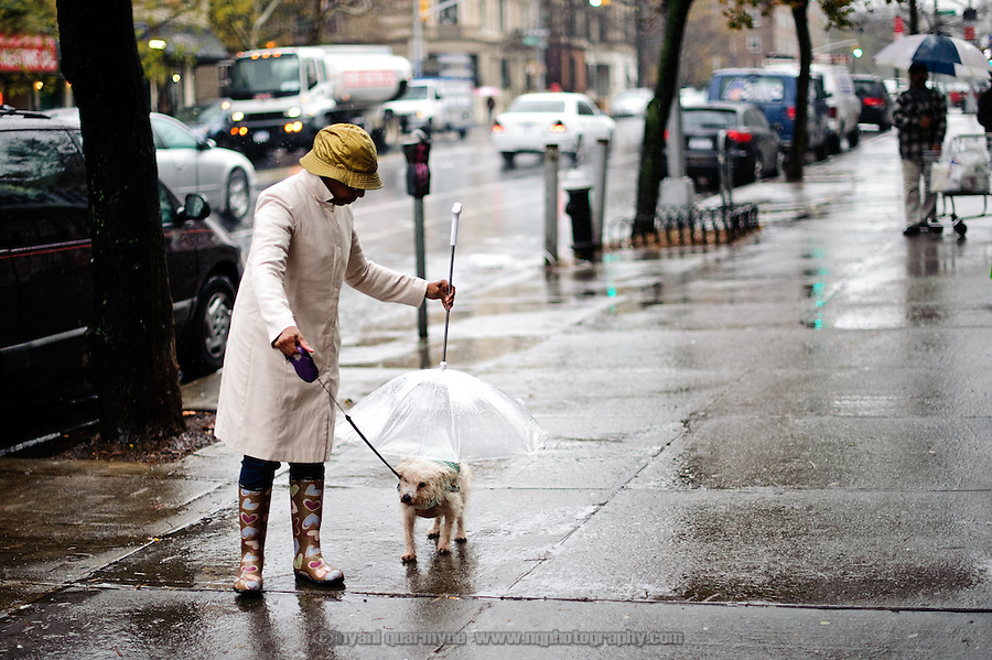Walking the dog, New York City style.
