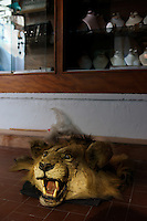 Tripoli, Libya, March 27, 2011..A Libyan lion's head greets the rare visitors of a Tripolil antique shop with a silent and harmless roar. Ten days after the beginning of the Coalition military operation over Libya, economic standstill and uncertainty about the future weigh heavily toll on the population's morale..