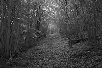 Footpath leading to Druids Grove. Norbury Park, Surrey, UK.