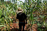 Mbya Guarani elder Ramon Duarte exploring the property of Katupyry village near San Ignacio, Misiones, Argentina.