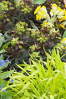 Primula, Euphorbia, Hakon grass, Brunnera in beautiful spring planting combination of yellow, green, red, blue color theme tones