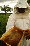 Pico Bonito National Park, Honduras..Beekeepers. A project to promote sustainable agriculture in the sensitve buffer zone of the rainforest..November, 2005.