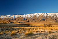 Tussocks, Hawkdun Mountain Range, Sunset, Central Otago, New Zealand - stock photo, canvas, fine art print