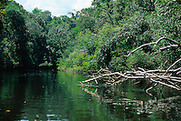 Amazon tributary in rainforest, Amazonas State, Brazil
