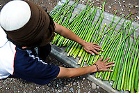 A man preparing water hyacinth, Makassar, Sulawesi, Indonesia.  The hyacinth is then used to produce material for sandals.